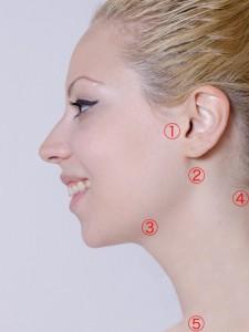 顔リンパ部分[1]
